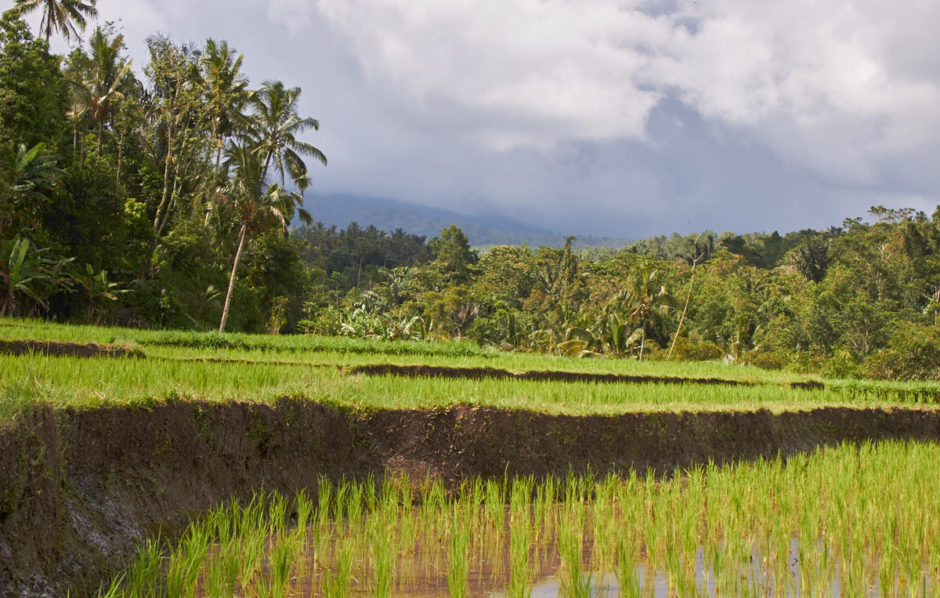 Bali Jungle Hike Delightful Vegans